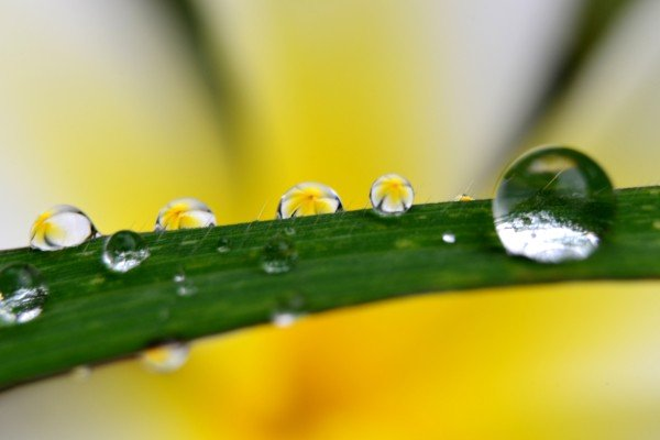 """Image from """"Droplets,"""" a photographic series by Natcha W., Mud Season Review"""