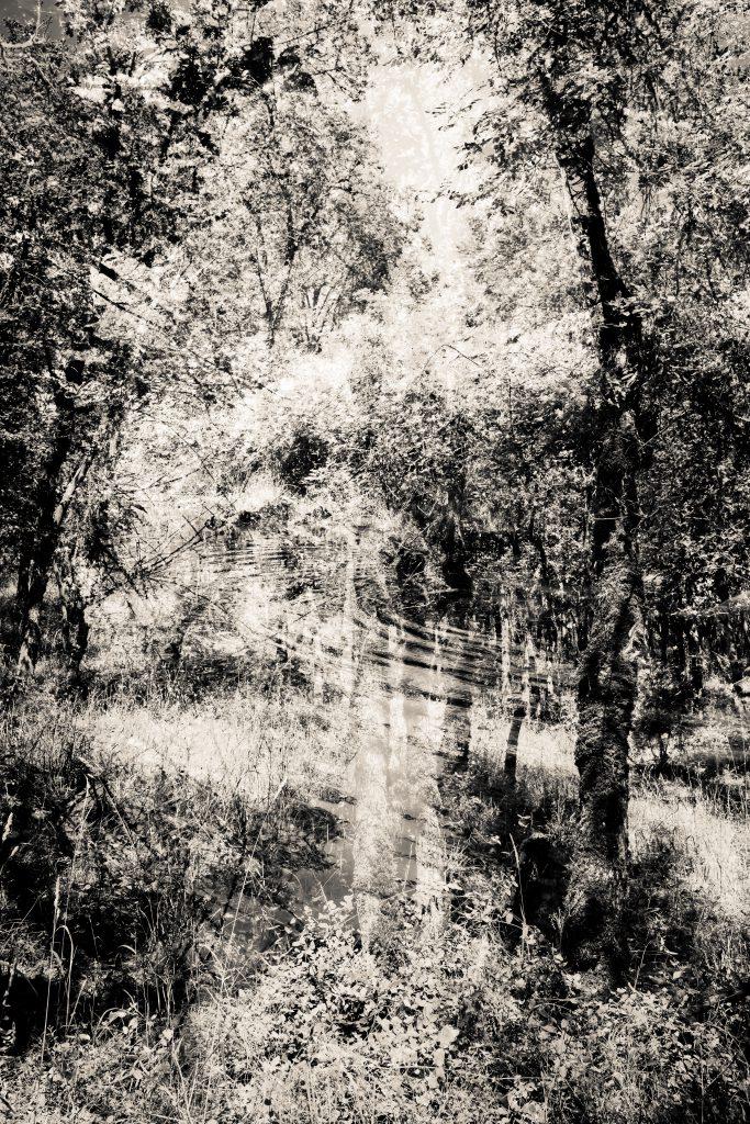 "'Myrtle Ripple"" by Joe McDermott,24"" x 26"" Photograph, 7/06/2014, Mud Season Review"