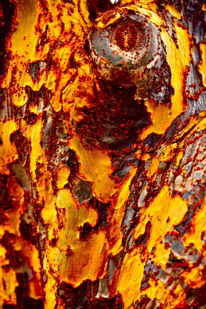 """Downtown Tree Trunk With Fungus"" by William C. Crawford, photo"